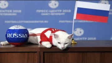 FIFA World Cup 2018: Achilles 'The Psychic' Cat Predicts The Opening Match Winner